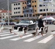 Как пропускать пешехода по новым правилам