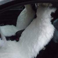 Автомобильные чехлы из меха