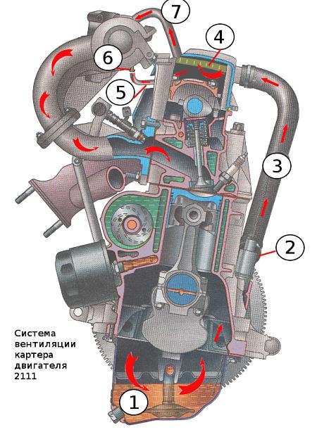 Система вентиляции картера ВАЗ 2111: 1. Картер двигателя. 2. Сапун. 3. Шланг от сапуна к патрубку клапанной крышки. 4. Маслоотделитель под клапанной крышкой. 5. Тонкий шланг от клапанной крышки к штуцеру с жиклером блока дроссельной заслонки. 6. Штуцер с жиклером на блоке дроссельной заслонки. 7. Толстый шланг от клапанной крышки к впускной трубе.